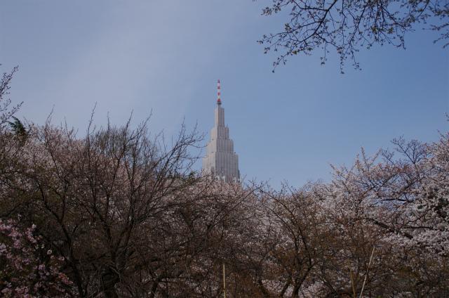 2013新宿御苑01