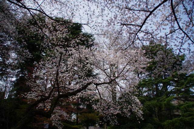 2013新宿御苑02