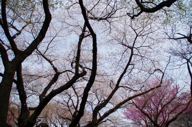 2013新宿御苑03
