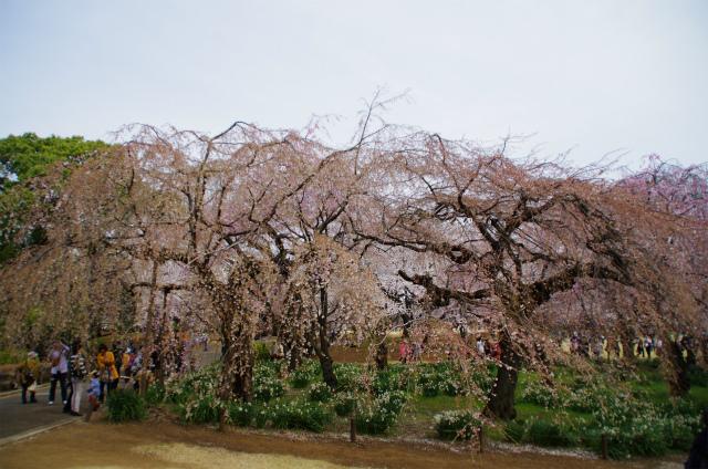 2013新宿御苑04
