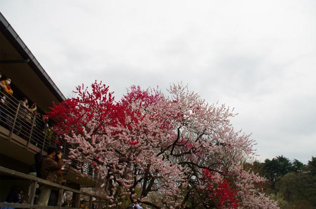 2013新宿御苑07