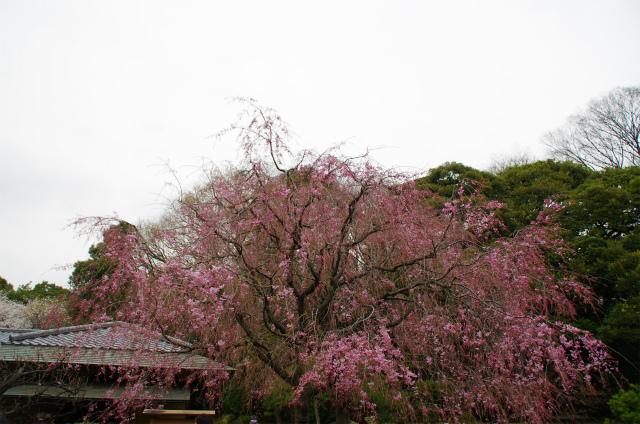 2013新宿御苑13
