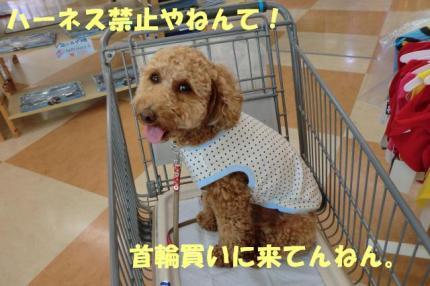 お買い物中やねん