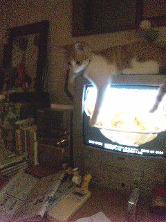 テレビにて
