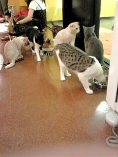 東京猫カフェ2