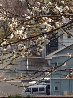 春ですにゃ3