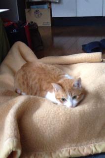 お気に入り毛布6