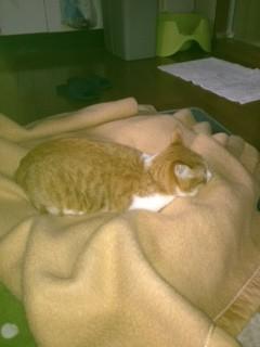 お気に入り毛布2