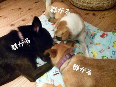 ○P1190933