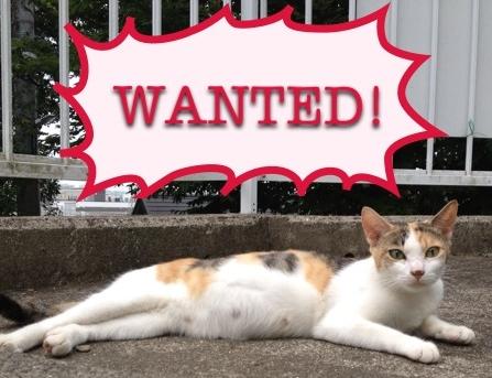 wanted_三毛