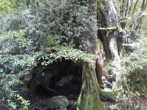 20120816_三代杉-005