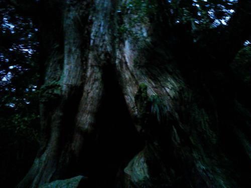 20120817_二代杉-001