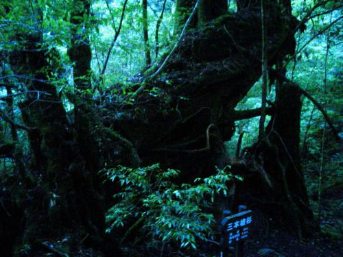 20120817_三本槍杉-002