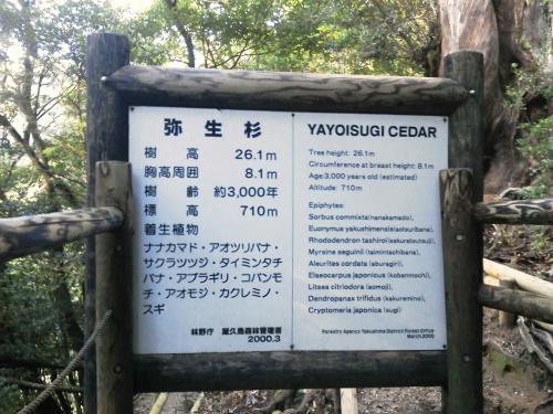 20120817_弥生杉-009