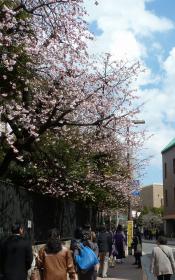 2012.03.26  学内 桜