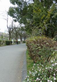 2012.03.26 戸山公園