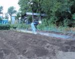白菜の畝作り