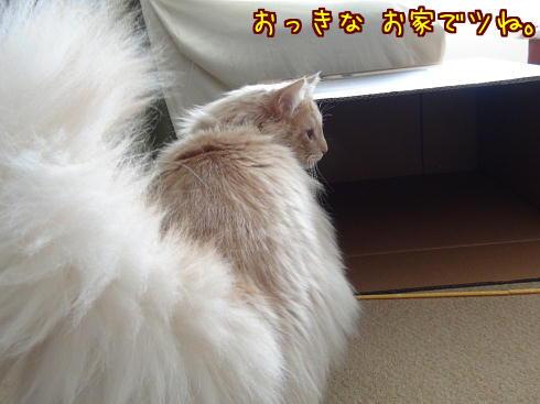 sato392_20130320232408.jpg