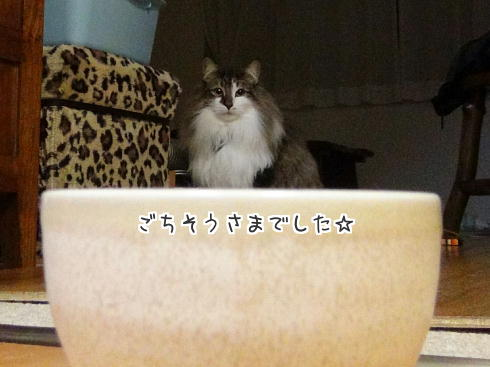 sato464.jpg