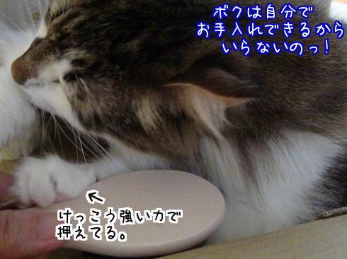 sato946.jpg