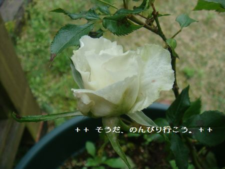 DSC05080-1.jpg