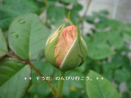 DSC05083-1.jpg