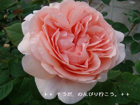 DSC05345-1.jpg