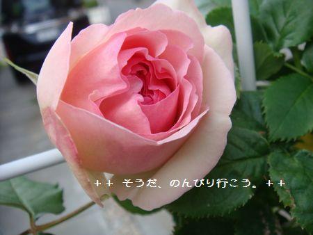 DSC05359-1.jpg