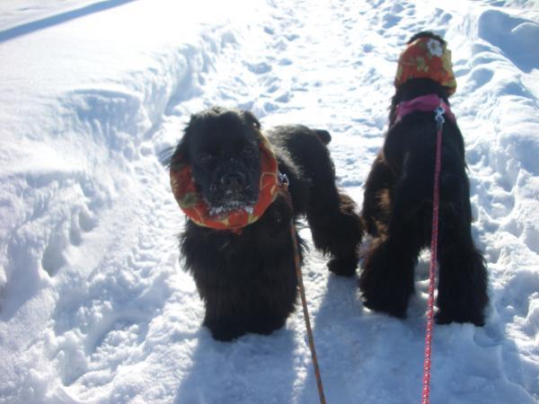 2009冬 散歩 3