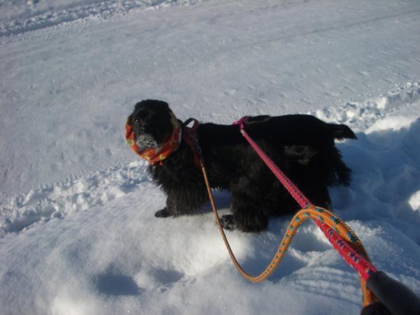 2009冬 散歩 2