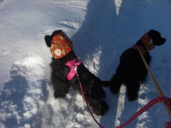 2009冬 散歩 1