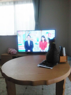 TV見てる?