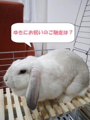 yukinoha.jpg