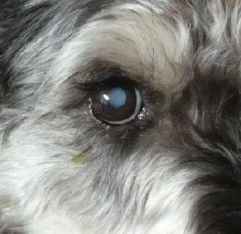 pekoの目