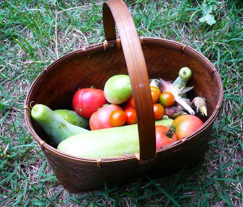 8月10日収穫野菜