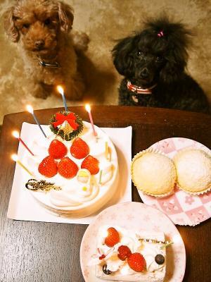 ケーキ いっぱ~い