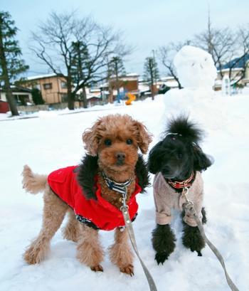 名取公園 雪いっぱい