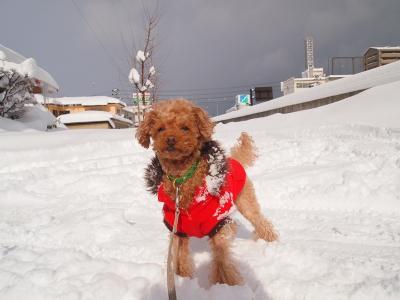 雪多すぎるよ。。。