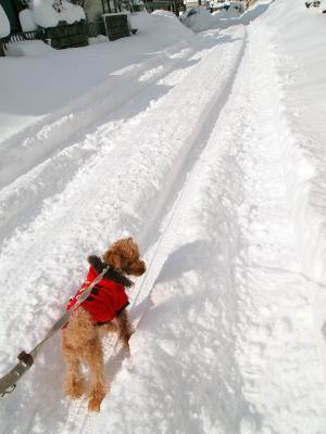 除雪されてないね。 歩きにくいよ