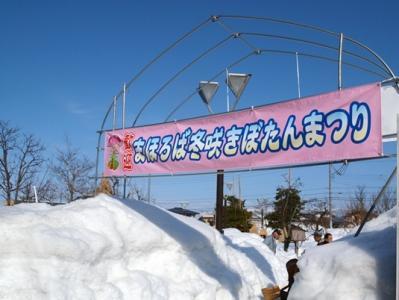 まほろば冬咲きぼたん祭り