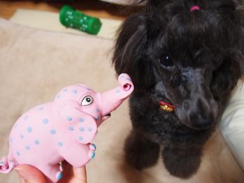 象さん、顔怖い