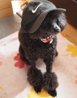 帽子姿だよ~