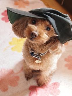 帽子 似合う?