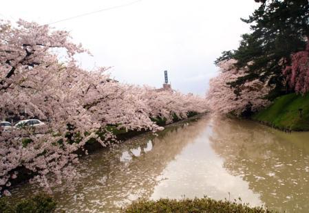 弘前の桜♪