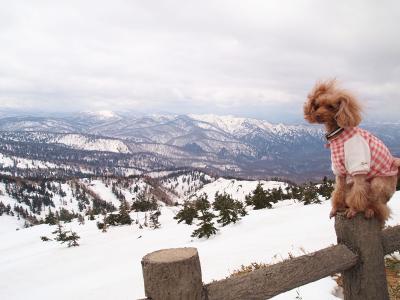 ベルと雪山