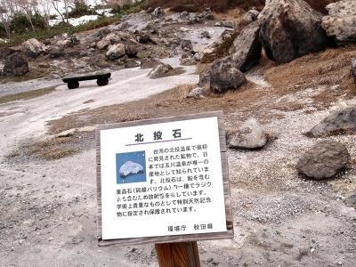 秋田 玉川温泉