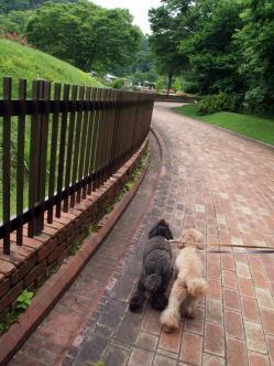 ベルユメ バラ公園の周りを歩く