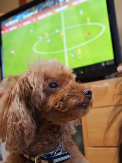 サッカー観戦中