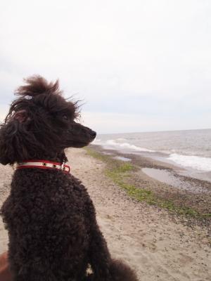海を見るのは 2回目だよ