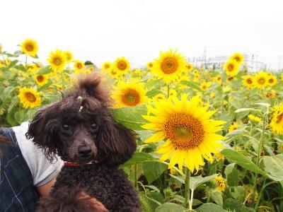 向日葵と ゆんちゃん